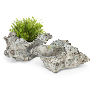 Pointy Shell Planter