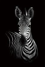 60x90cm / Zebra Monochrome Animal Collection - Pebble & Leaf HomeArt