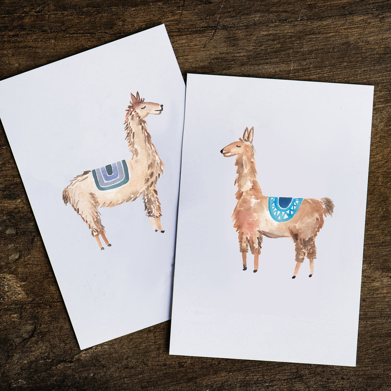 William Llama Print