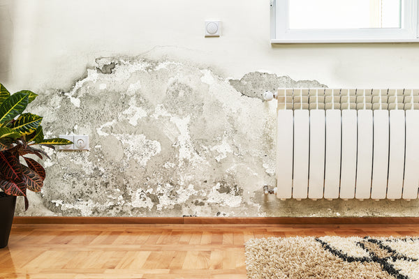 mold home renovations