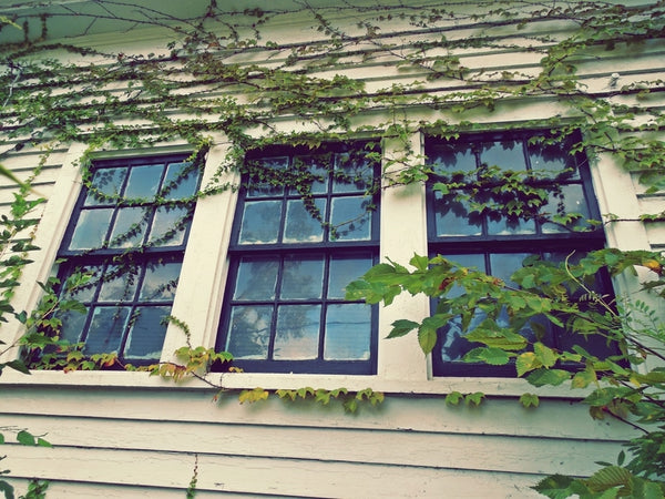 windows vines
