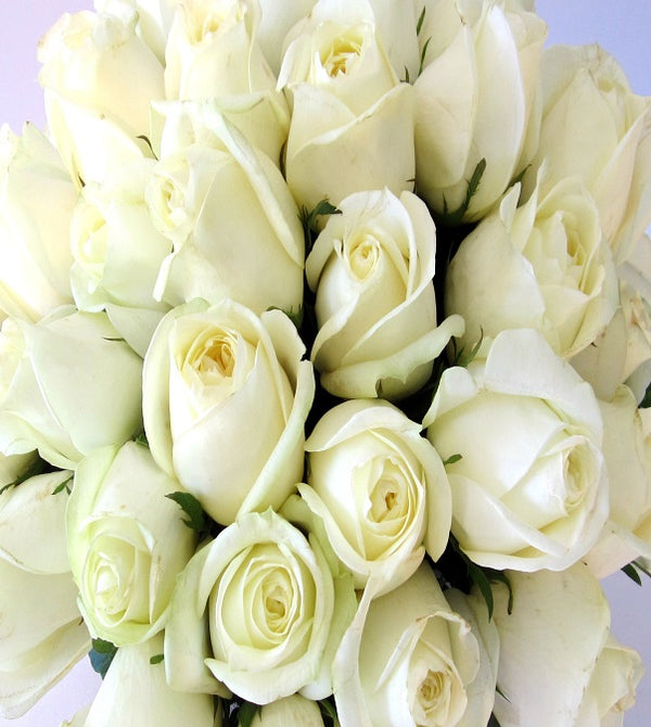 White Roses by David Jeffrey Florist