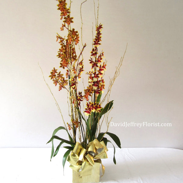 David Jeffrey's Oncidium Orchids.