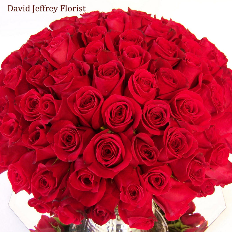 David Jeffrey's Red Rose Cluster