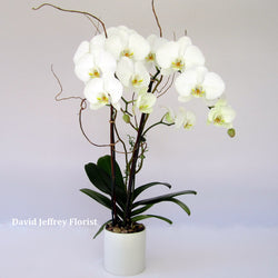 David Jeffrey's Serenity Orchids