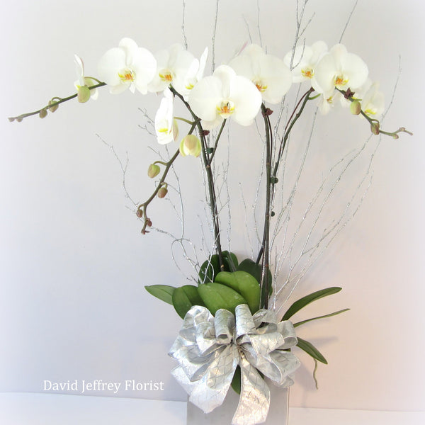 David Jeffrey's Holiday Orchids