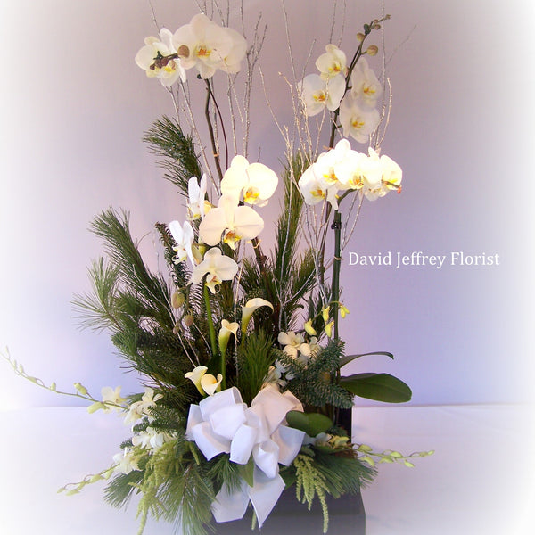 David Jeffrey's Winter White Orchids