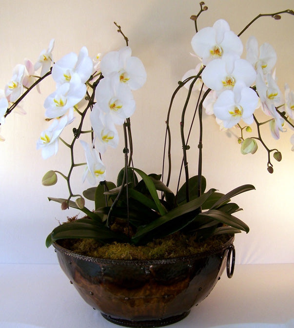 Orchid Flowers Online