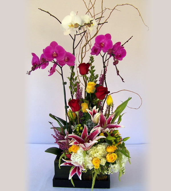 David Jeffrey's Love Story Orchids