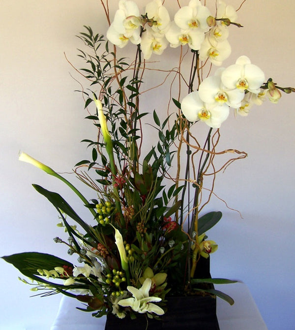 Planted Orchid Flower Combo