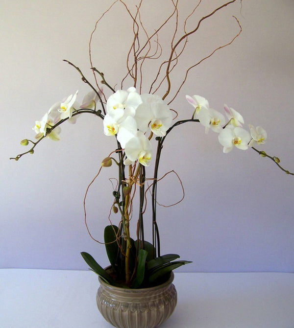 Orchids by david jeffrey