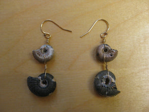 Pyrite Ammonite Earrings