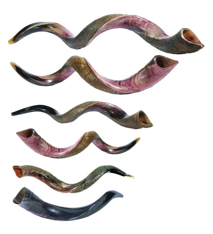 Yemenite Shofar
