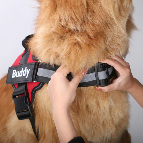 custom dog harness