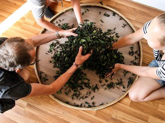 How to make tea from Camellia Sinensis at home?