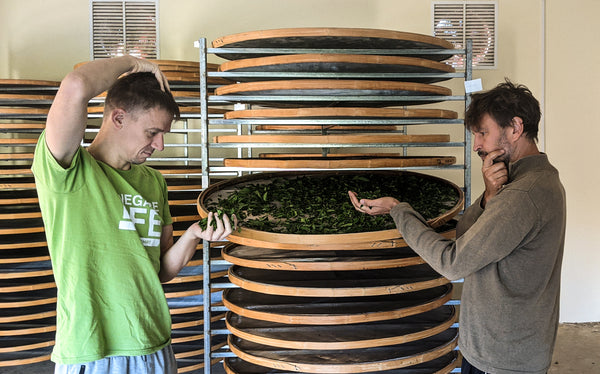hannes and Tomas at Renegade Tea Estate factory