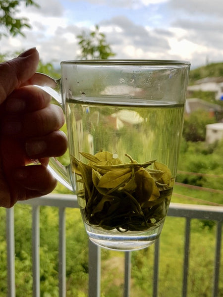 Tea from rolled tea leaves. Also the very first-testcup of Renegade Tea Estate tea.