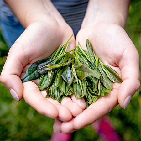 organic tea leaves