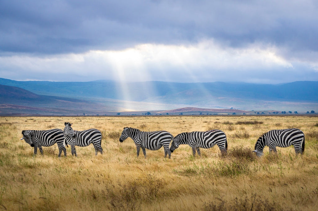 Picture of tanzania wildlife