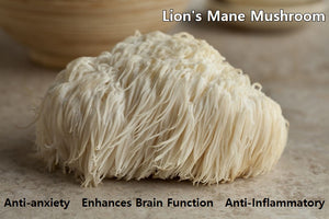 Lion's Mane: The Brain Booster!