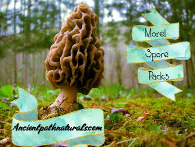 5 Pack Morel Dry Spores Outdoor Cultivation Morchella