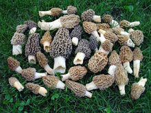 Wild Mushroom Dry Spores Outdoor Cultivation Mushroom seeds Millions of spores per pack! Easy to Grow at Home