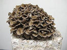 Mushroom Grow Kit Dry Spores Outdoor Cultivation Mushroom Seeds Easy to Grow at Home