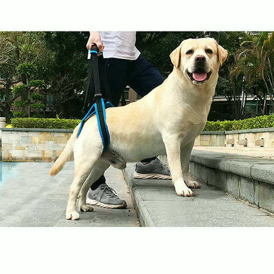Dog Rear Leg Lift Harness Support (For Dogs with Hip Dysplasia, Rehabilitation, Joint Injuries)