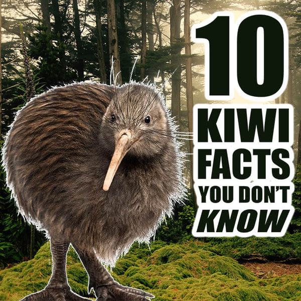 10 Kiwi Bird Facts You DON'T Know