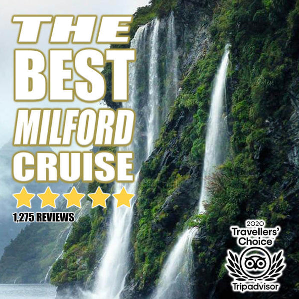 Best Milford Sounds Cruise of 2021 (Trip Advisor Travelers Choice Award)