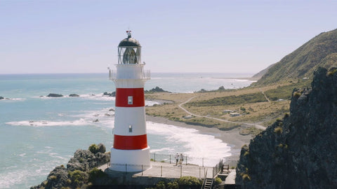 Cape Palliser Seal Colony
