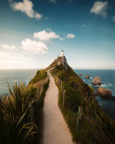 Nugget Point Seals New Zealand