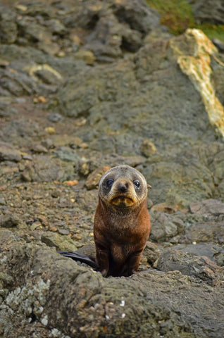 Discover the best places to see seals in New Zealand