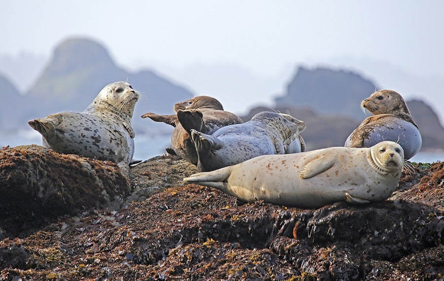 9 Best Places to See New Zealand Seals