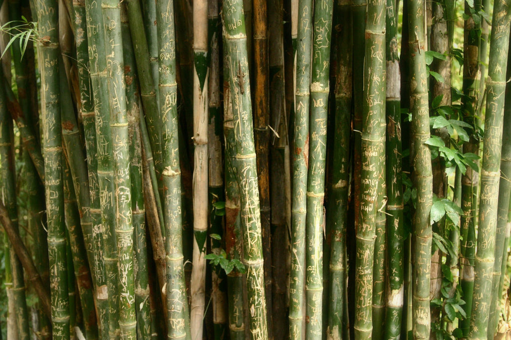 We need to talk about bamboo