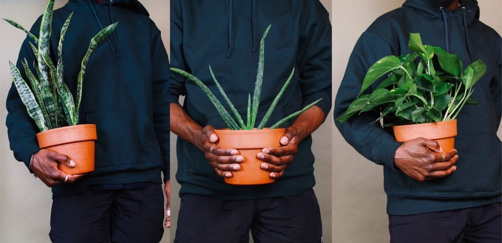 HBCU Grads Set To Open New Virtual Plant Shop With Subscription Service