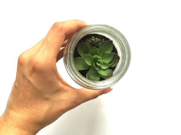 How To Green Your Space: DIY Terrarium