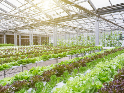 How LEDs are Helping Greenhouse Farming