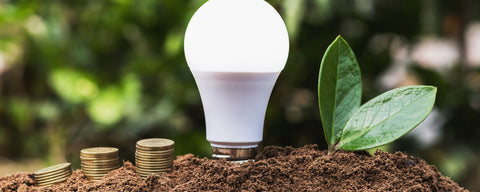 LED light bulb and money in dirt