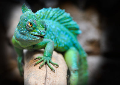 Best Lighting for Reptiles