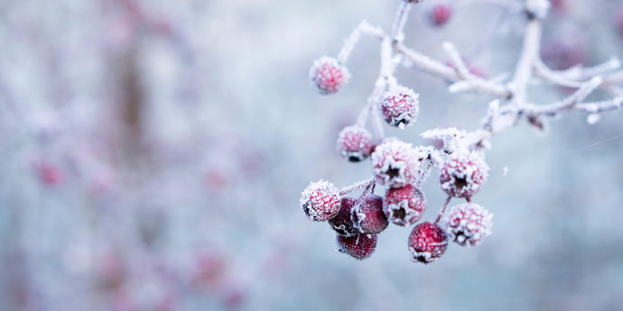 Winter is coming… So says my skin. How to help keep your skin hydrated this winter.