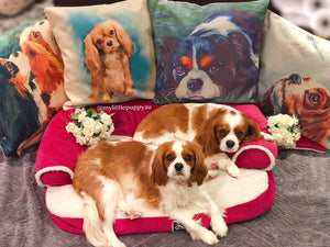 cavalier, cushion cover, cover, home decor, decor, home, cavalier king charles spaniel