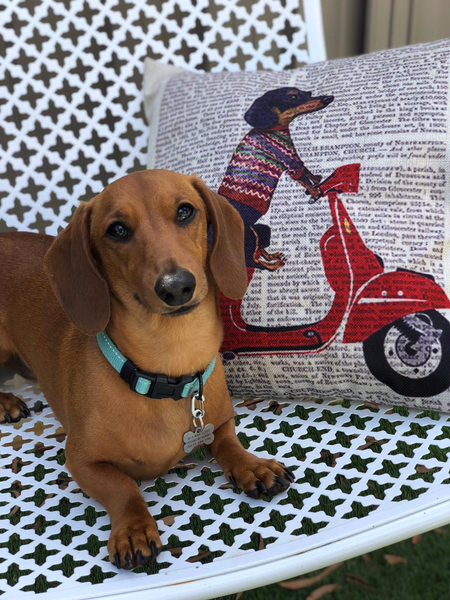 Ernie - Dachshund Cushion Cover