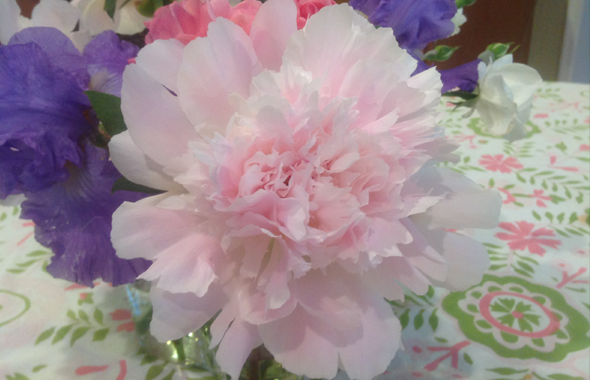 Plant, FANNYPANTS® Welcomes Summer Peonies!