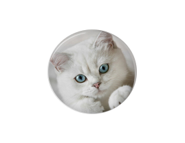 Button | White Cat | Badges and Buttons Club