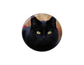 Button | Black Cat - badges-and-buttons-club