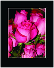 Hot Pink Long Stem Roses Wrapped Bouquet