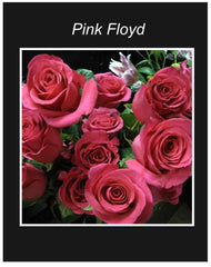 Pink Floyd Long Stem Roses Wrapped Bouquet