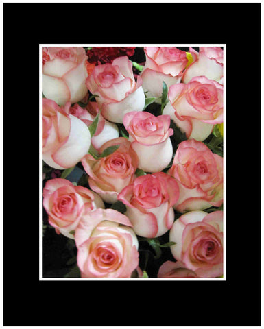 White with Pink Lip Long Stem Roses Wrapped Bouquet