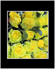 Yellow Long Stem Roses Wrapped Bouquet